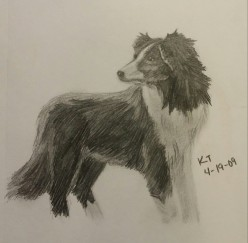 Collie, Pencil, 19 April 2009