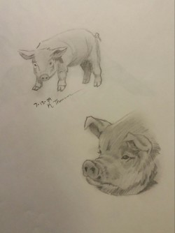 Pigs, Pencil, 13 July 2009