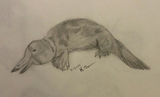 Platypus, Pencil, 13 July 2009