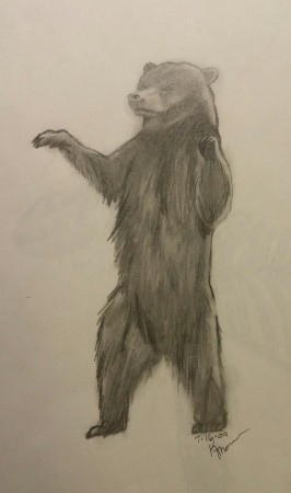Bear, Pencil, 16 July 2009