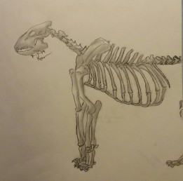 Lion Skeleton, Pencil, 17 July 2009