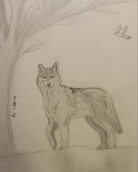 Wolf, Pencil, 28 January 2010