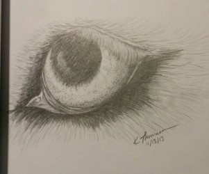 Wolf Eye, Pencil on Paper, 13 November 2013