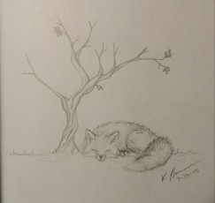Sleeping Fox, Pencil on Paper, 10 July 2015