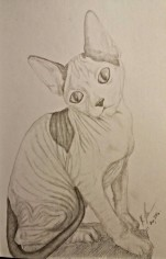 Hairless Cat, Pencil, 11 August 2016